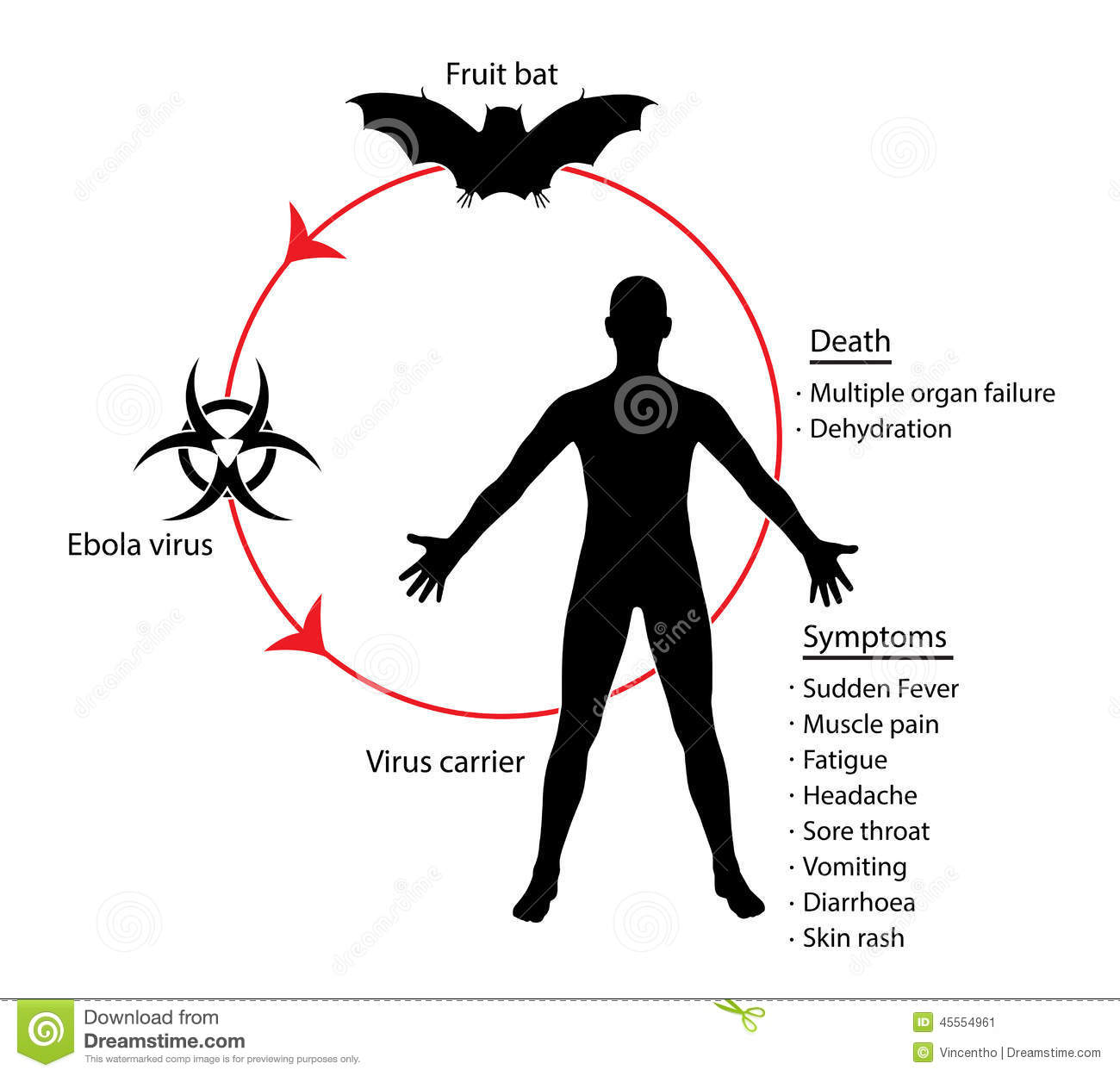 Ebola Basics Diagram Education Knowledge Illustration