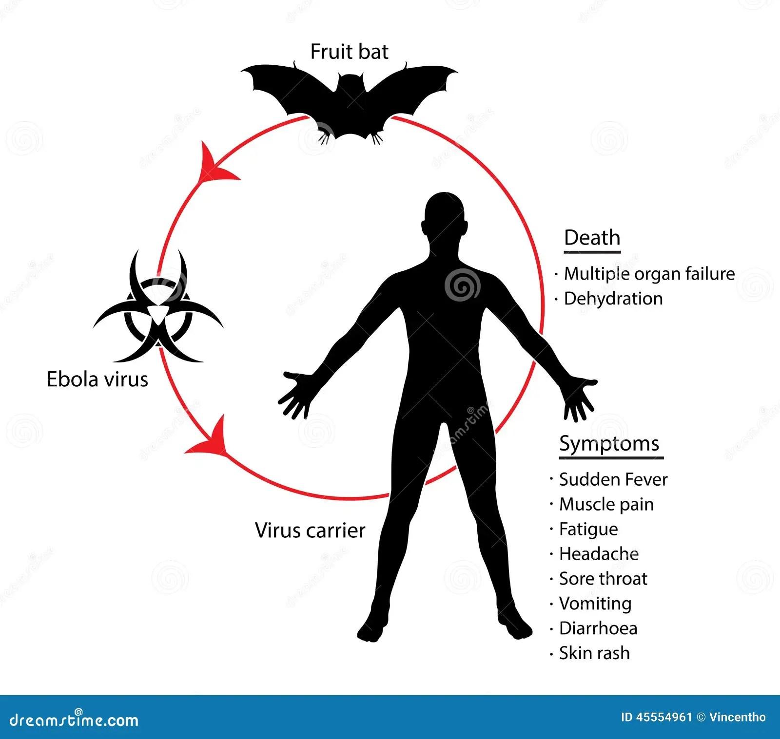 Ebola Grundlagen Diagramm Bildungs Wissens Illustration