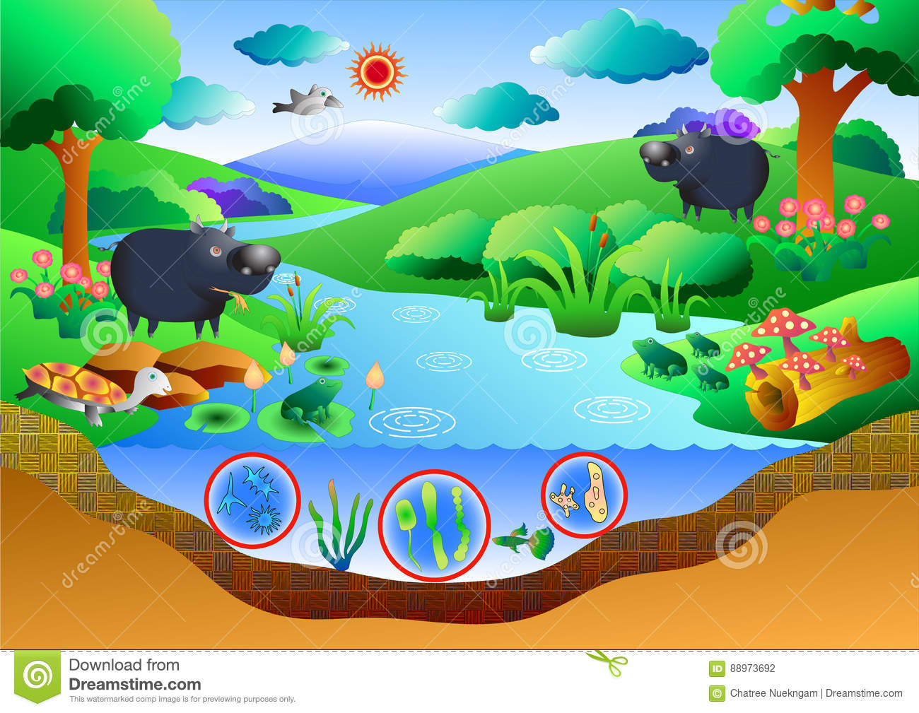 pond ecosystem diagram ignition coil condenser wiring cartoons illustrations and vector stock images