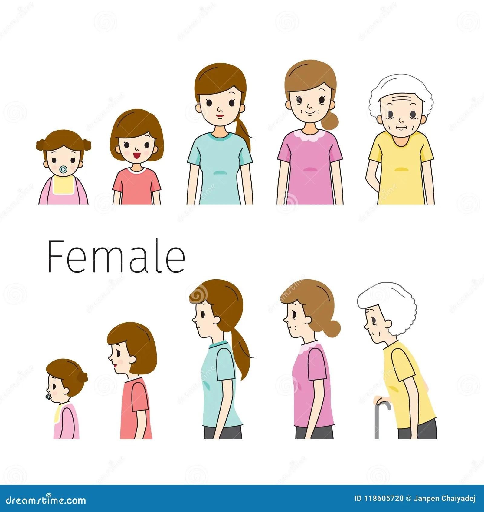 El Ciclo De Vida De La Mujer Generaciones Y Etapas Del