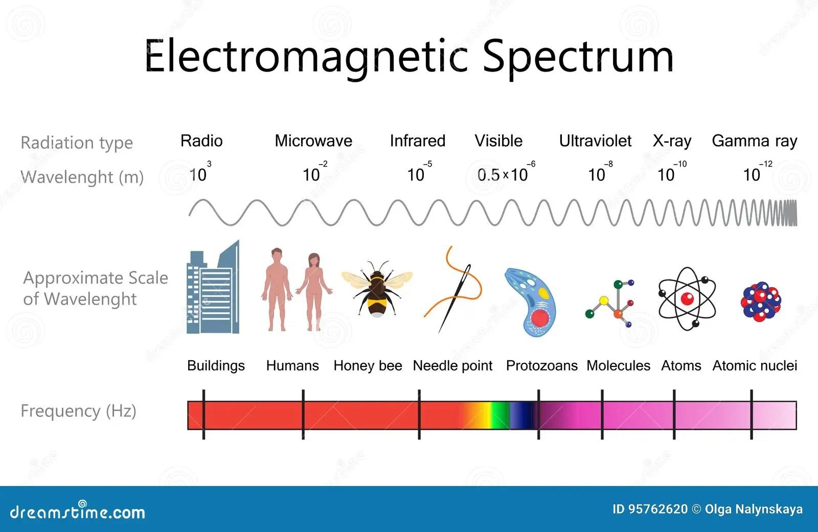 Electromagnetic Spectrum Diagram Stock Vector