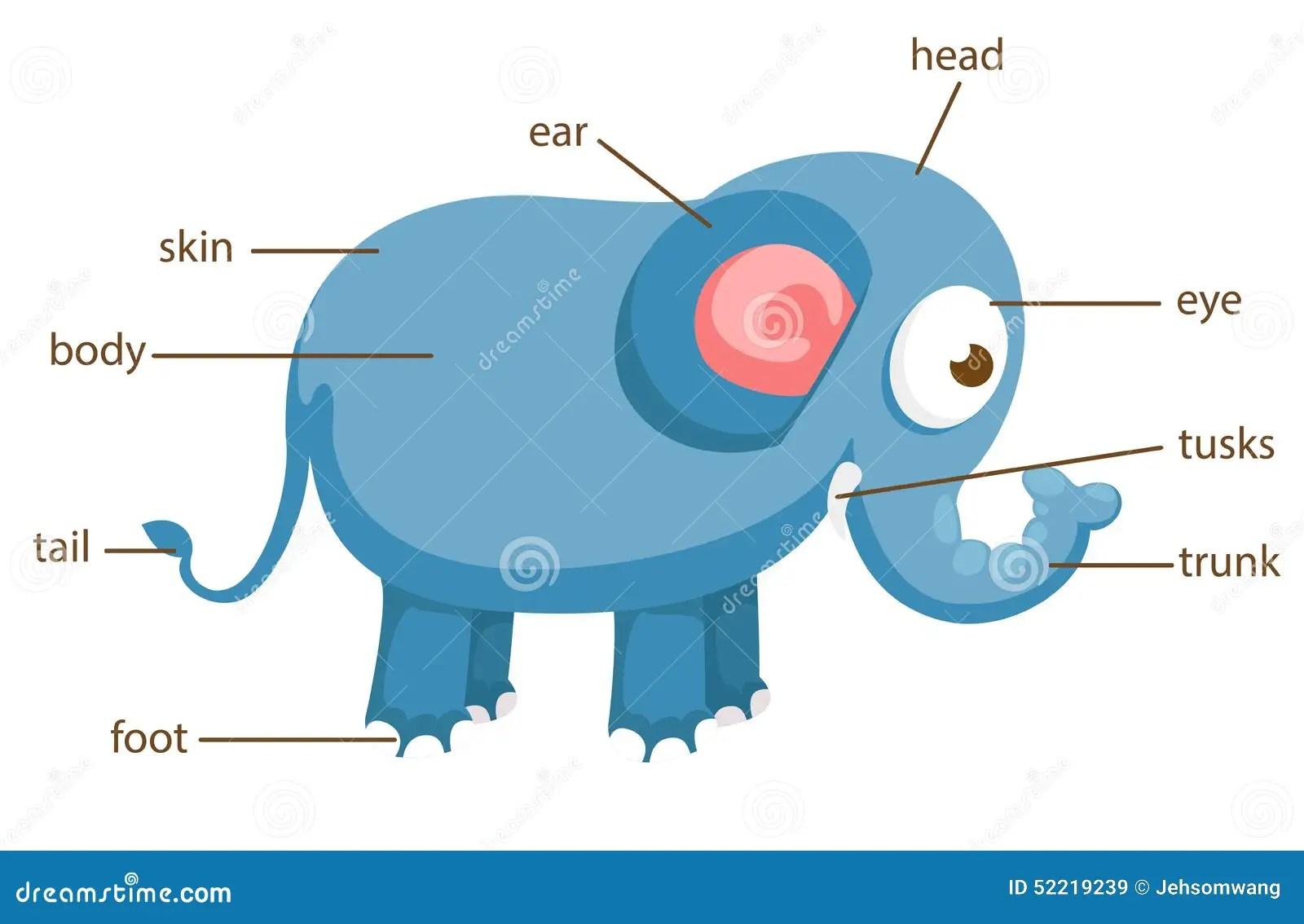 shrew skeleton diagram labeled yamaha golf cart battery wiring of elephants data elephant elsavadorla