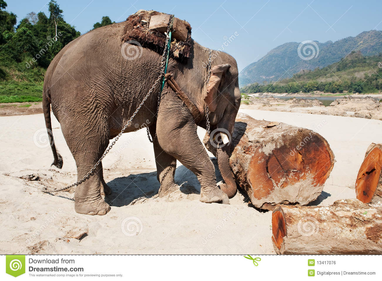 Elephant At The Work Royalty Free Stock Image