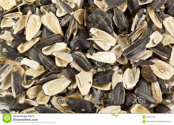 Empty Shells Of Sunflower Seeds Stock Photo Image 32337156