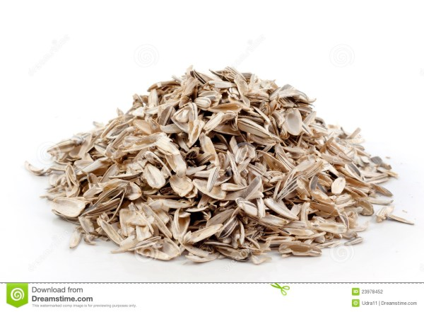 Empty sunflower seeds stock photo Image of white much