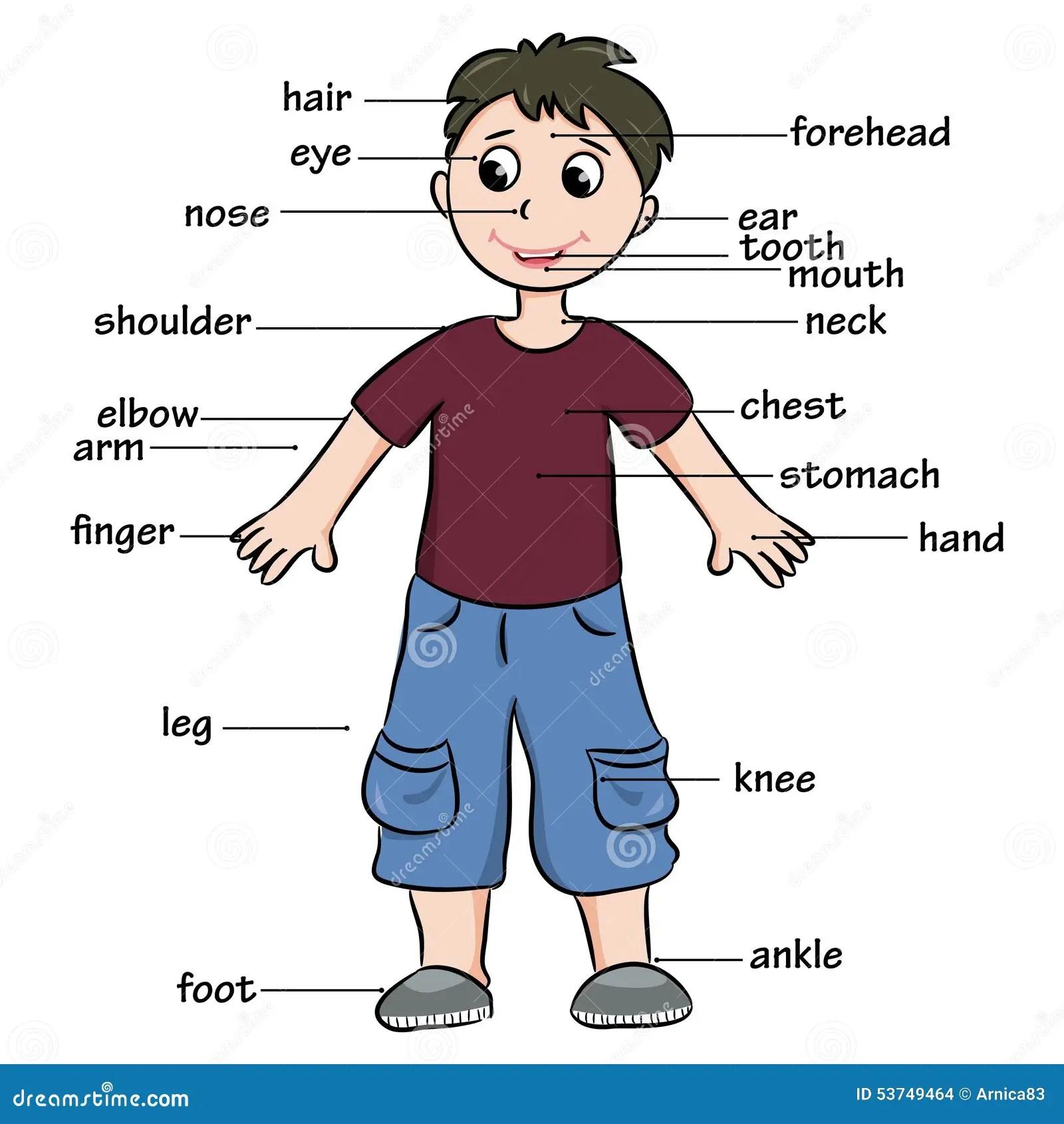 Enfant De Bande Dessinee Vocabulaire Des Parties Du Corps