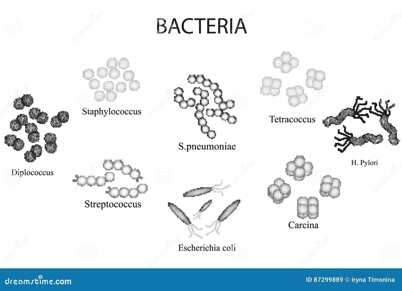 Ensemble De Bacteries Rebecca 36 Staphylocoque