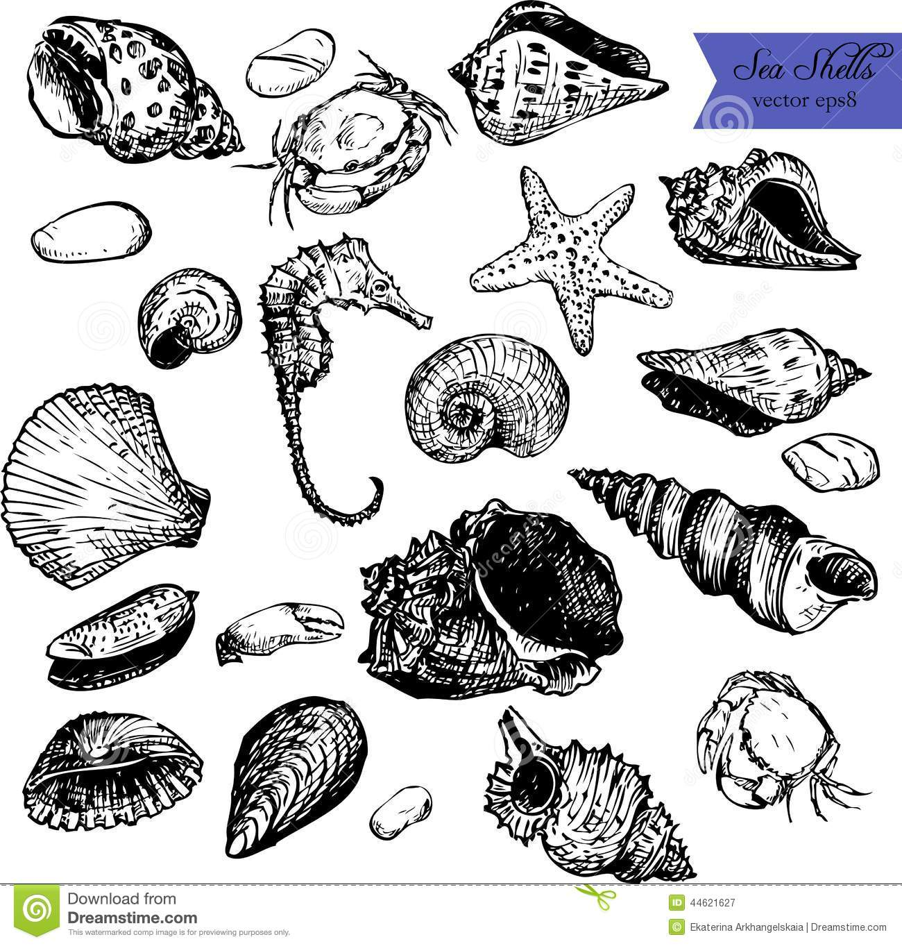Ensemble De Coquilles De Dessin Au Trait Illustration De