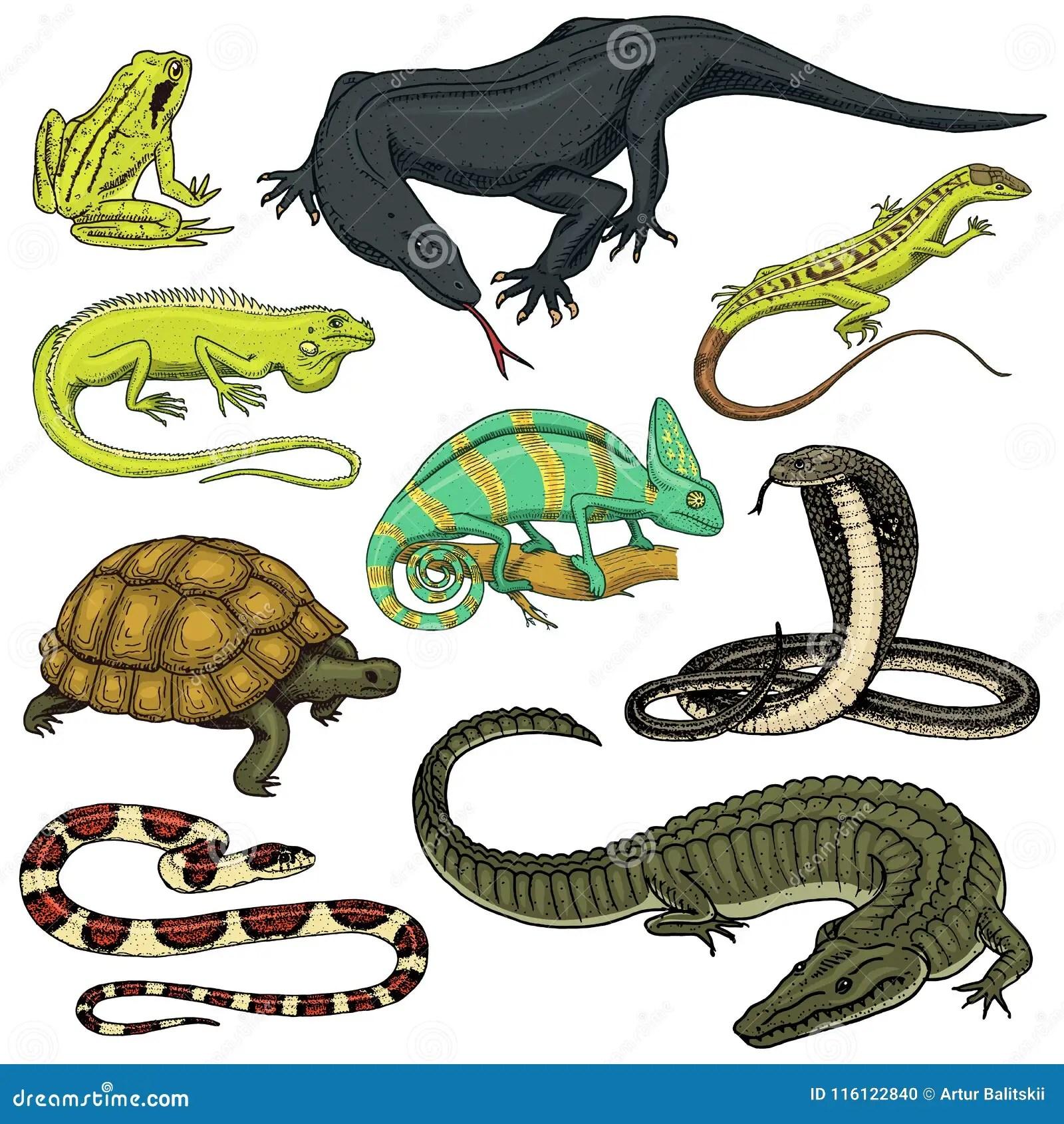 Ensemble De Reptiles Et D Amphibies Crocodile Alligator