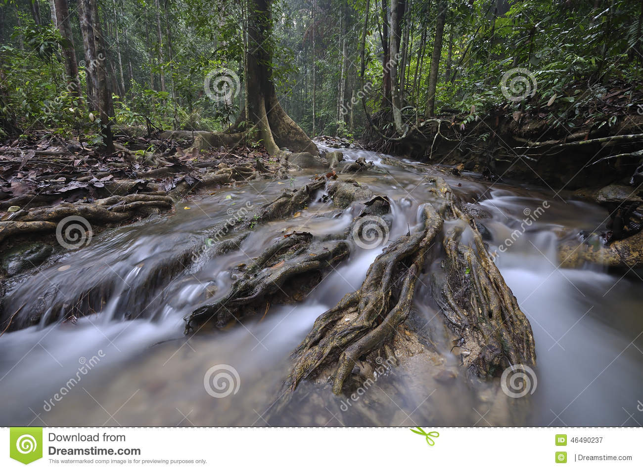 Home · archive · koalas · australian boodiversity · pangolins · contraband · jarrah forest, bauxite mining · jambi, indonesia · custom page · custom page. The Equatorial Forest With Trees And Bushes Stock Image Image Of Peaceful Background 46490237