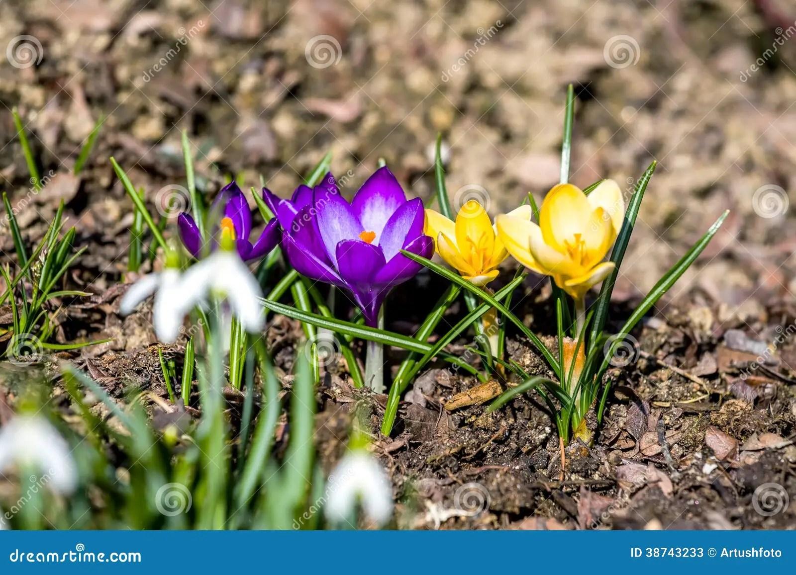 Fruhlingsblumen Garten Fruhlingszweige Als Deko Fur Die Vase Tipps