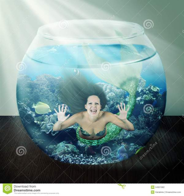 Evil Mermaid In Fishbowl With Fish Table Stock