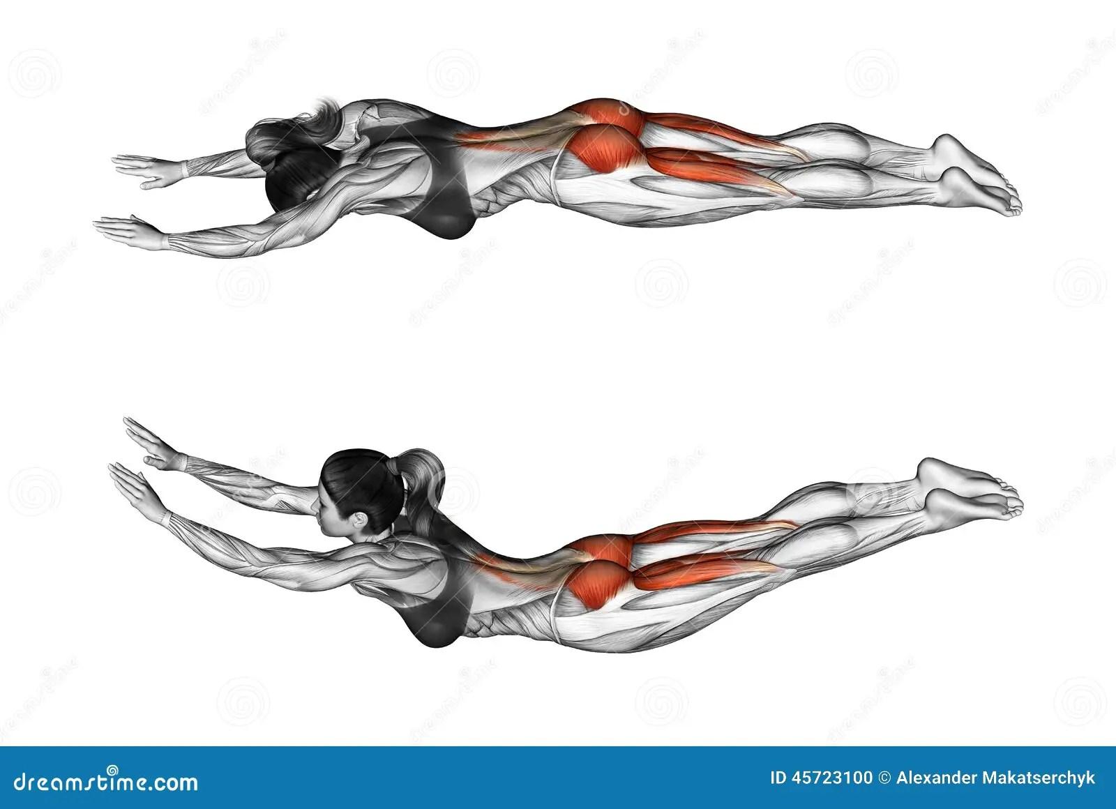 Exercice De Forme Physique L Exercice Aiment Le Surhomme
