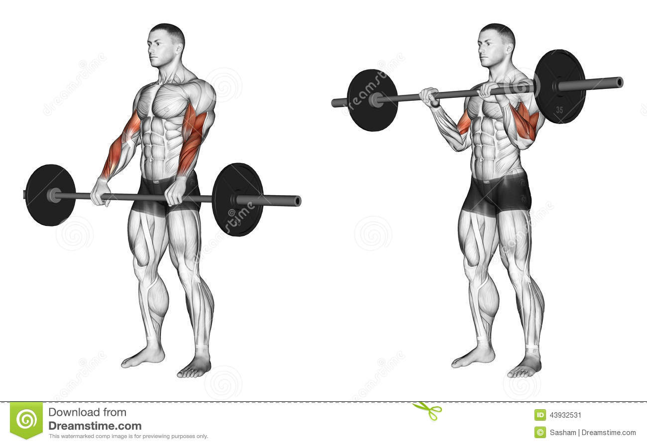Exercising Curl With A Barbell Grip On Top Stock
