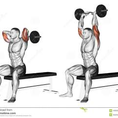 Roman Chair Back Extension Muscles Hon Volt Exercising. Arms With Curved Barbell Fro Stock Illustration - Of ...