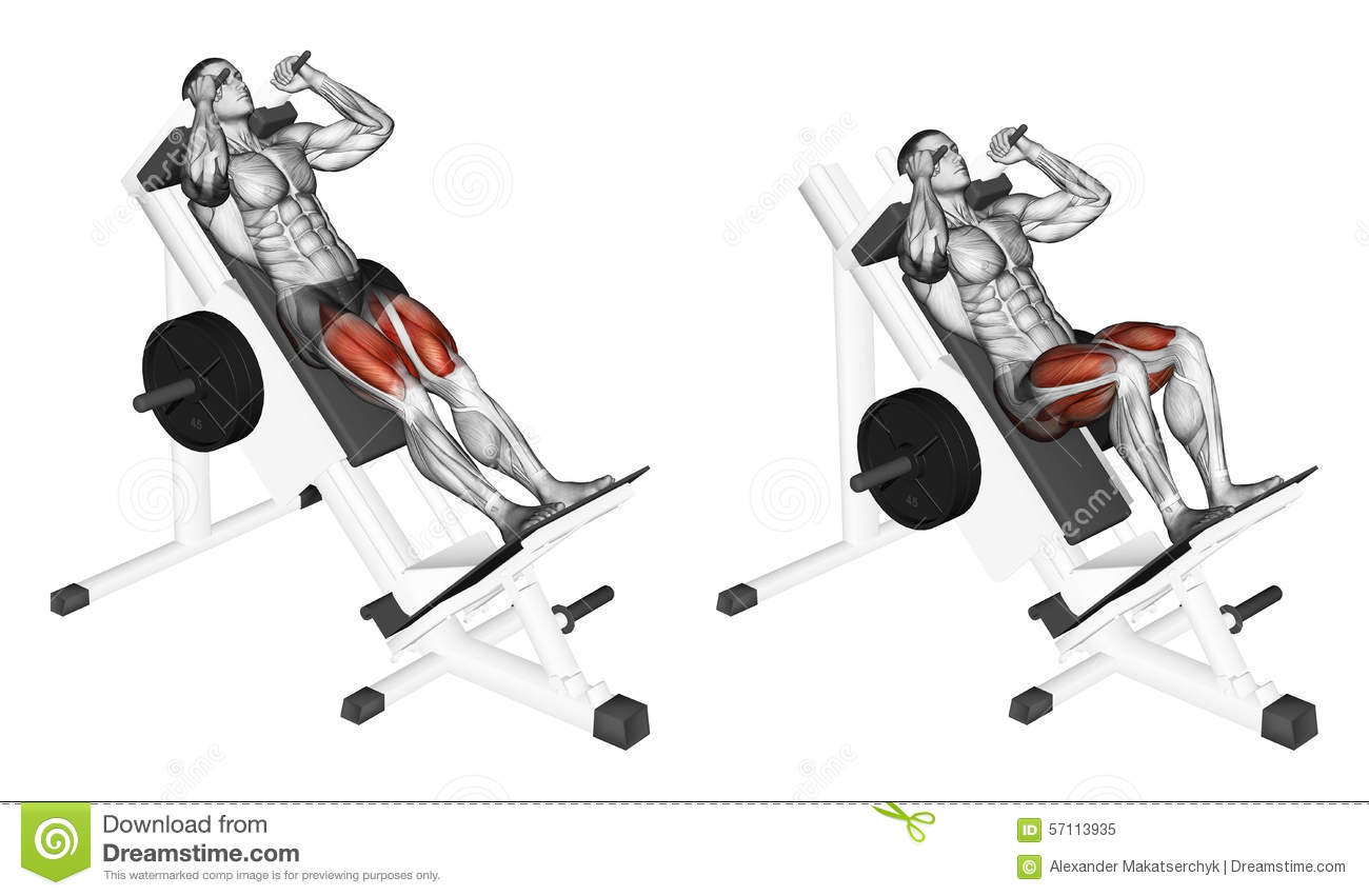 Exercising Hack Squats Stock Illustration Illustration