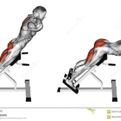Roman Chair Back Extension Muscles Floating For Bedroom Exercising Hyperextension Stock Illustration