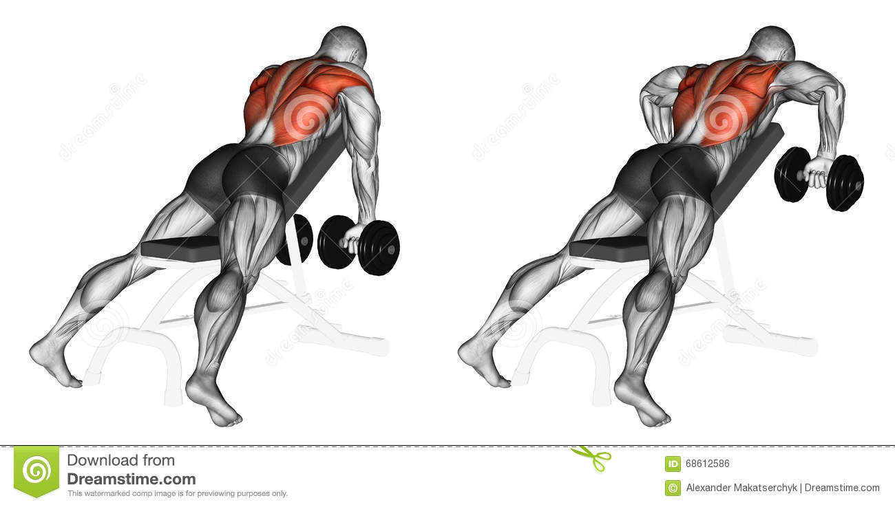 Exercising. Incline Bench Two Arm Dumbbell Row Stock