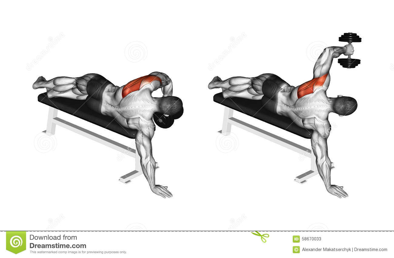 Exercising. Lead Hand With A Dumbbell Rear Deltoid Stock