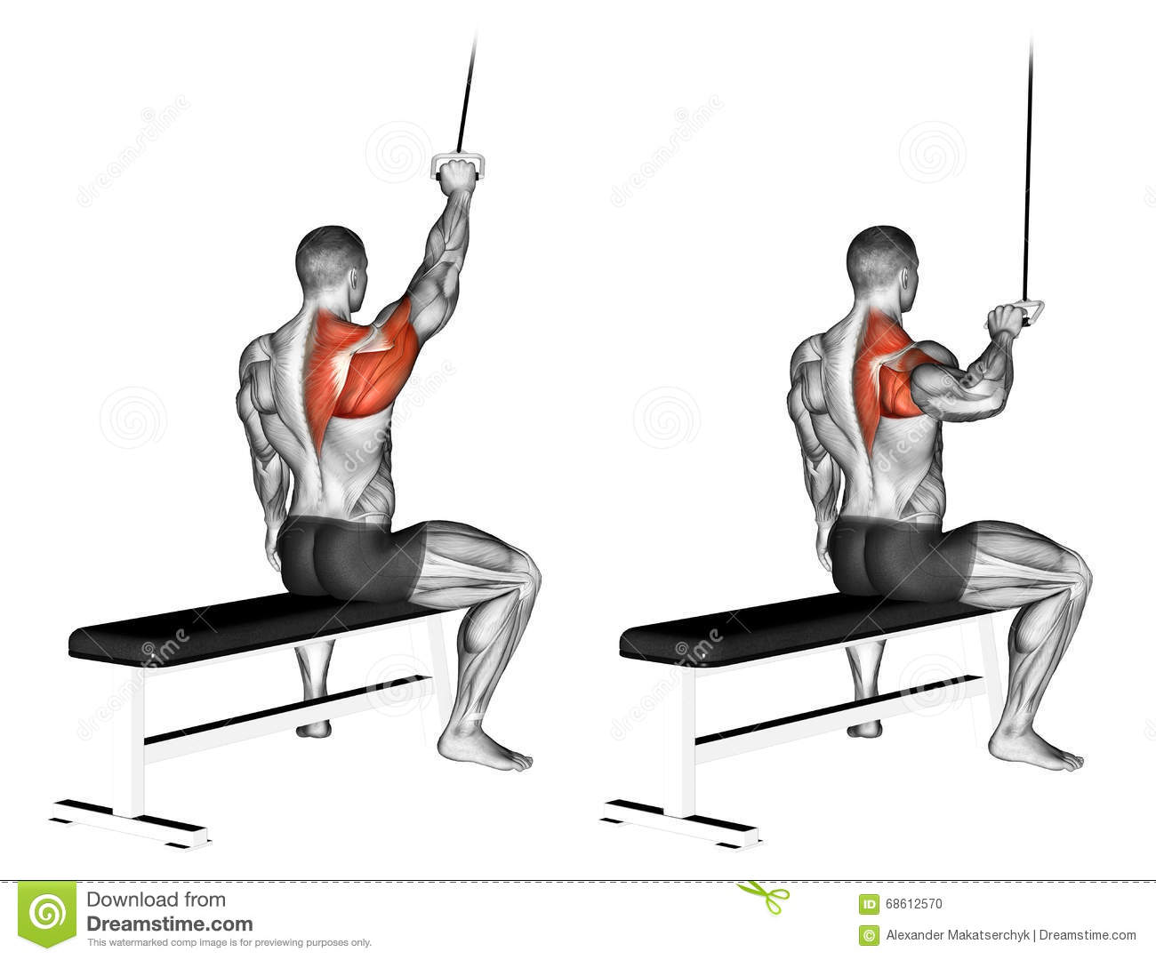 pull up muscles worked diagram 2001 ford f150 radio wiring exercising one handed lat pulldown stock illustration