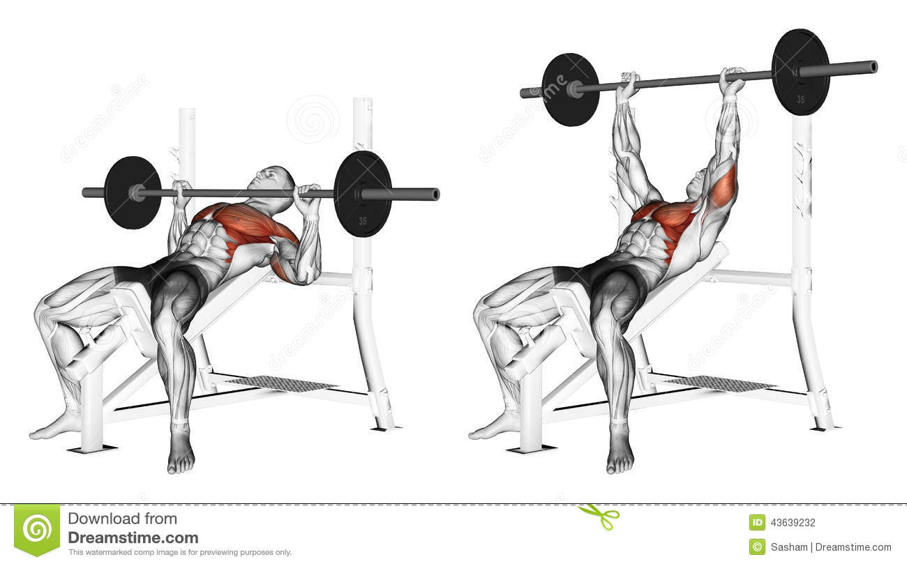 Exercising Press Of A Bar Lying On An Incline Be Stock