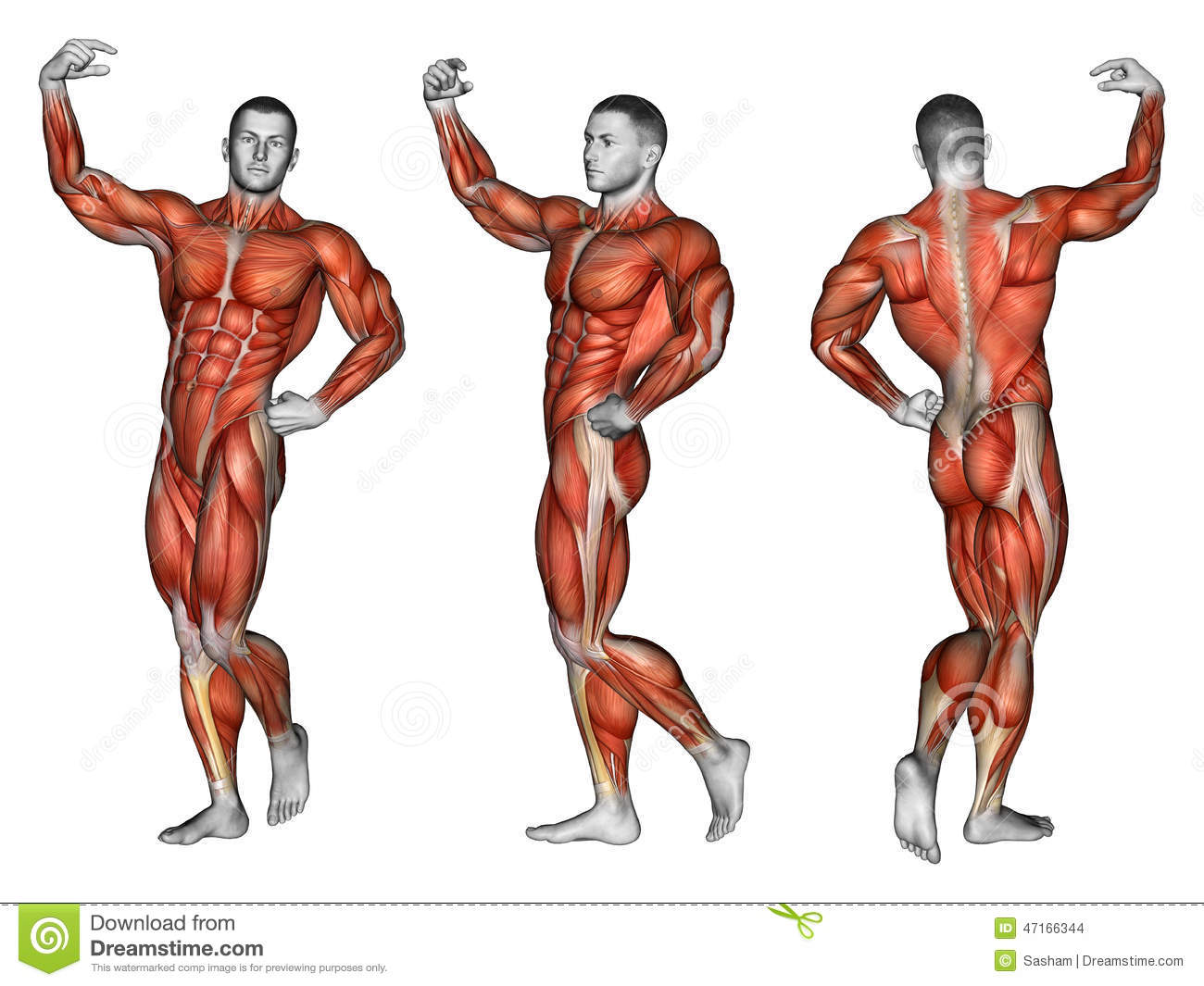 Exercising Projection Of The Human Body Apollo Stock