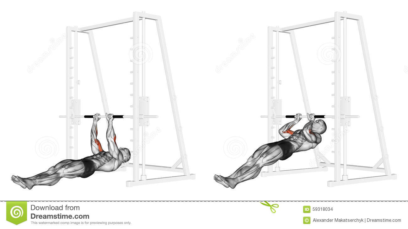 pull up muscles worked diagram electron dot for al exercising ups on the brachialis stock illustration bodybuilding target are marked in red