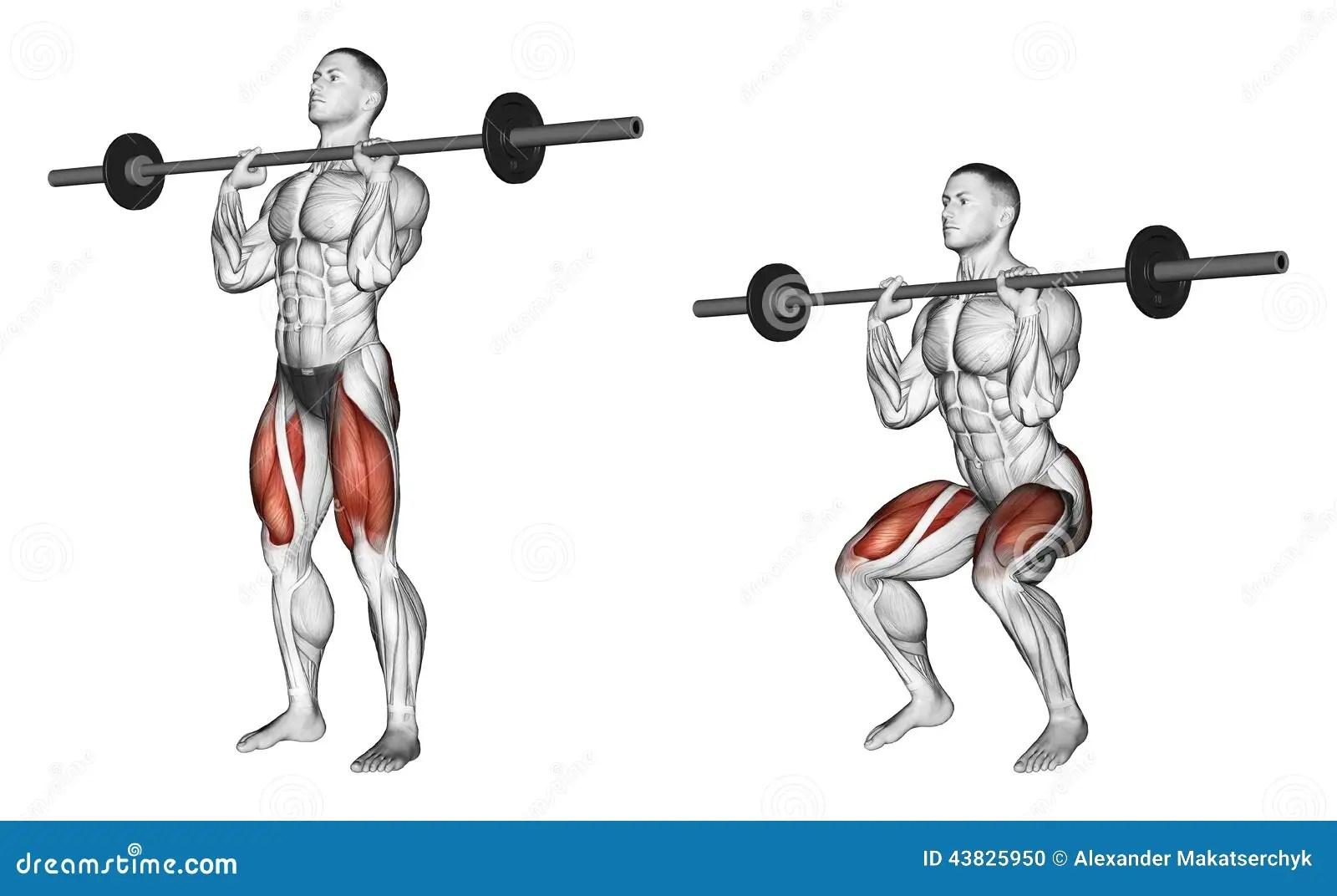 Bodybuilding Chest Exercises For Men Images