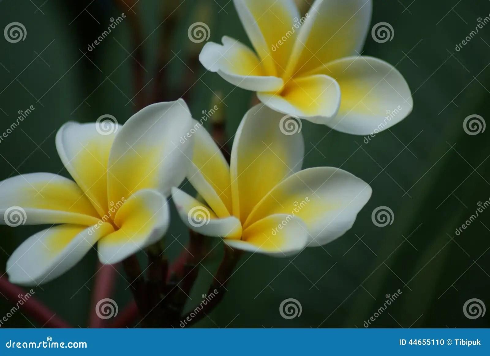 Exotische Bloemen In Cyprus Stock Foto  Afbeelding 44655110