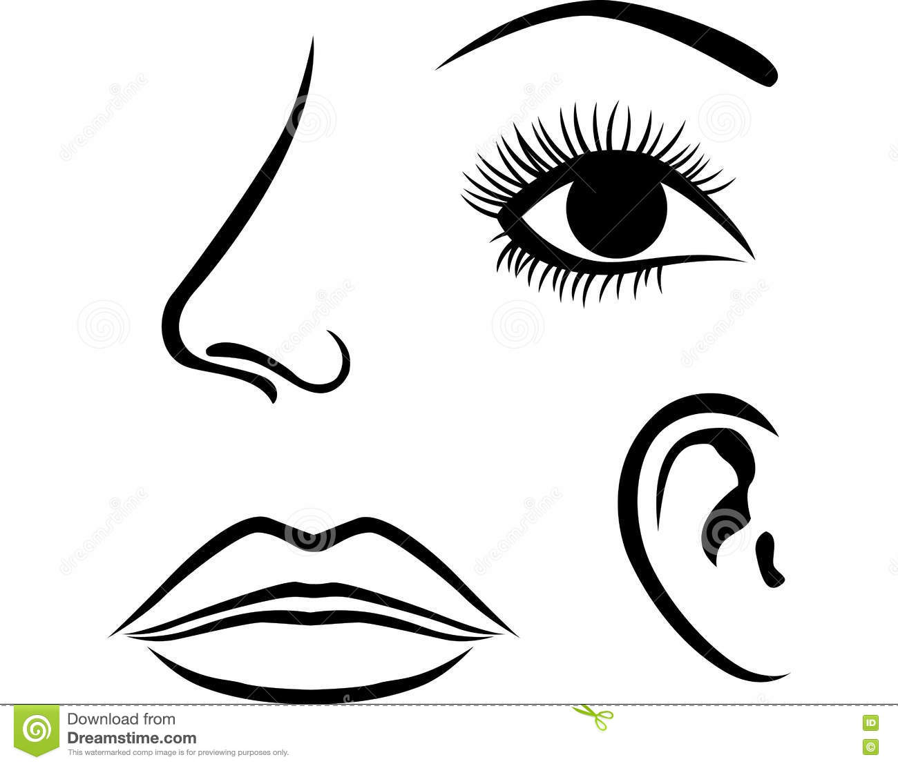 Eyes Nose Lips And Ear Icon Stock Vector