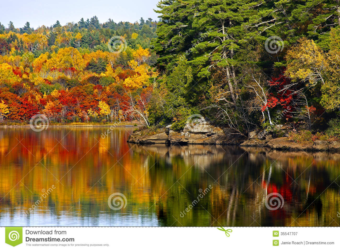 Fall Foliage Wallpaper Screensavers Fall Autumn Colors Water Reflection Royalty Free Stock