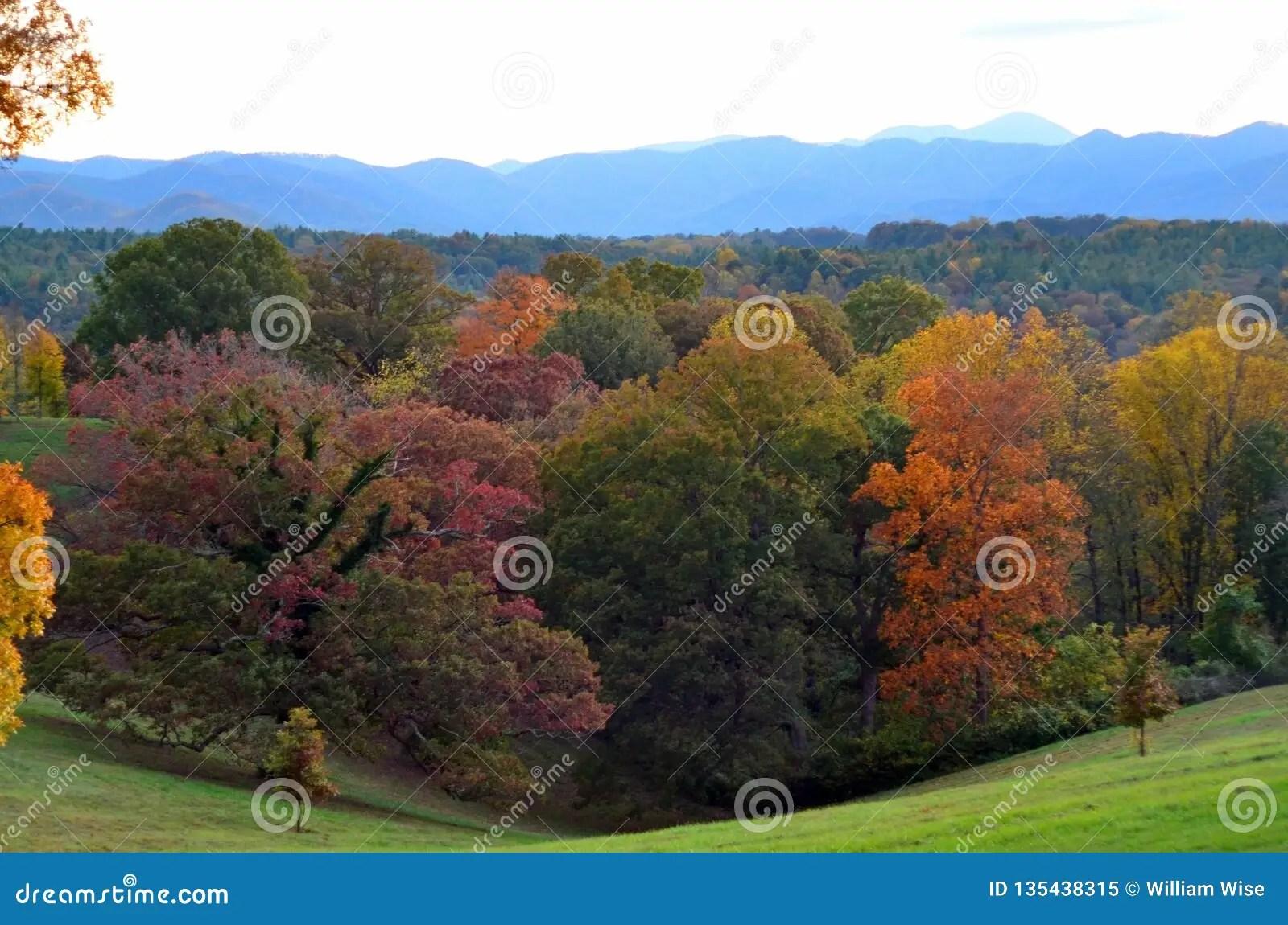 fall foliage at biltmore