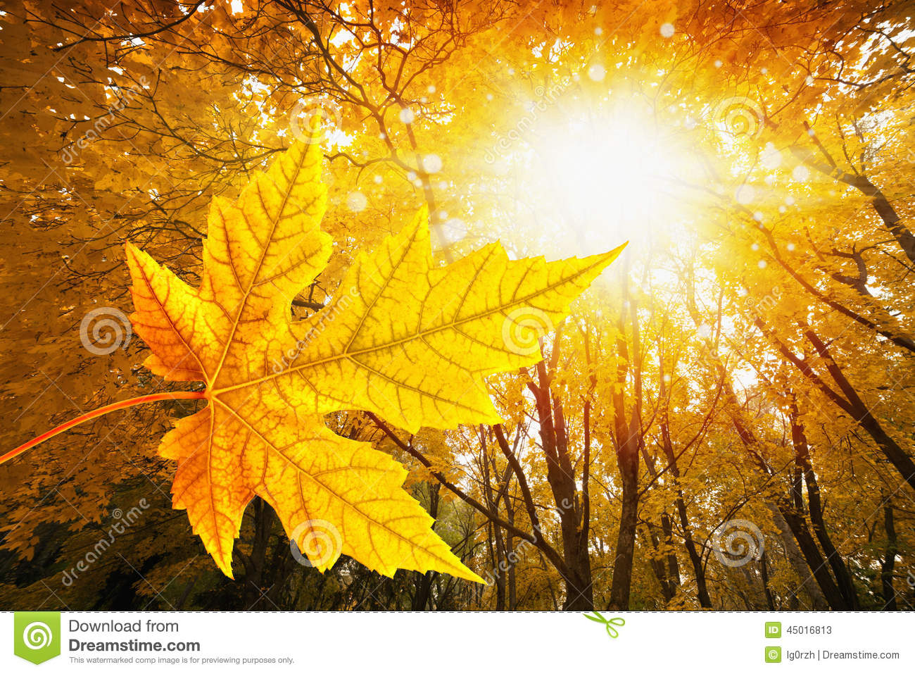 Fall Leaves Iphone 7 Wallpaper Fall In Forest Stock Image Image Of Leaves Yellow Maple