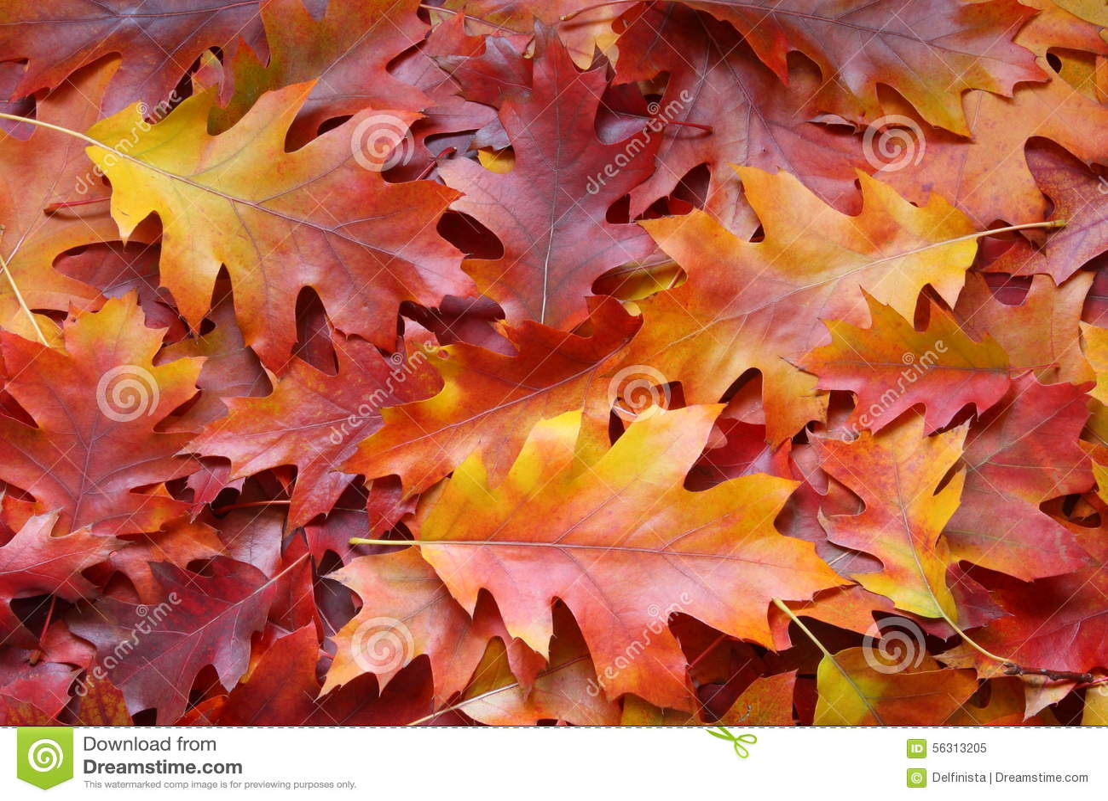 Worksheet Fall Leaf Acorns