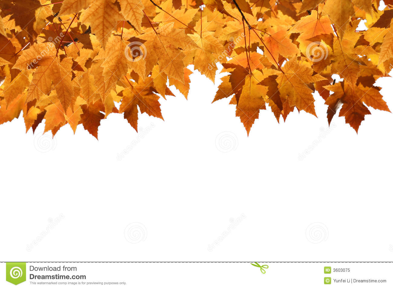 Free Fall Harvest Wallpaper Fall Leaves Blank Background Stock Image Image Of Blue