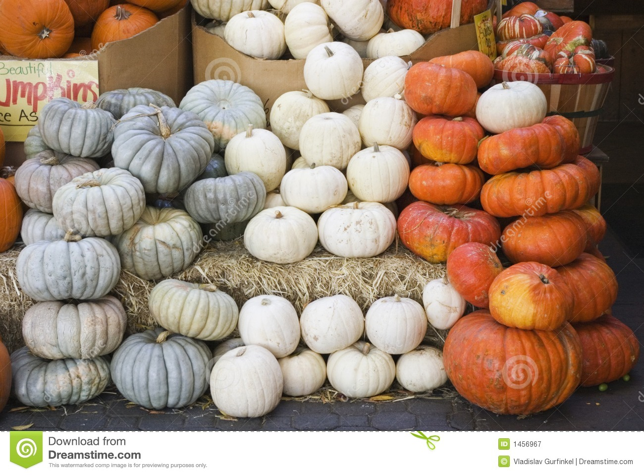 Fall Pumpkin Patch Wallpaper Fall Pumpkins Variety For Sale Stock Image Image Of