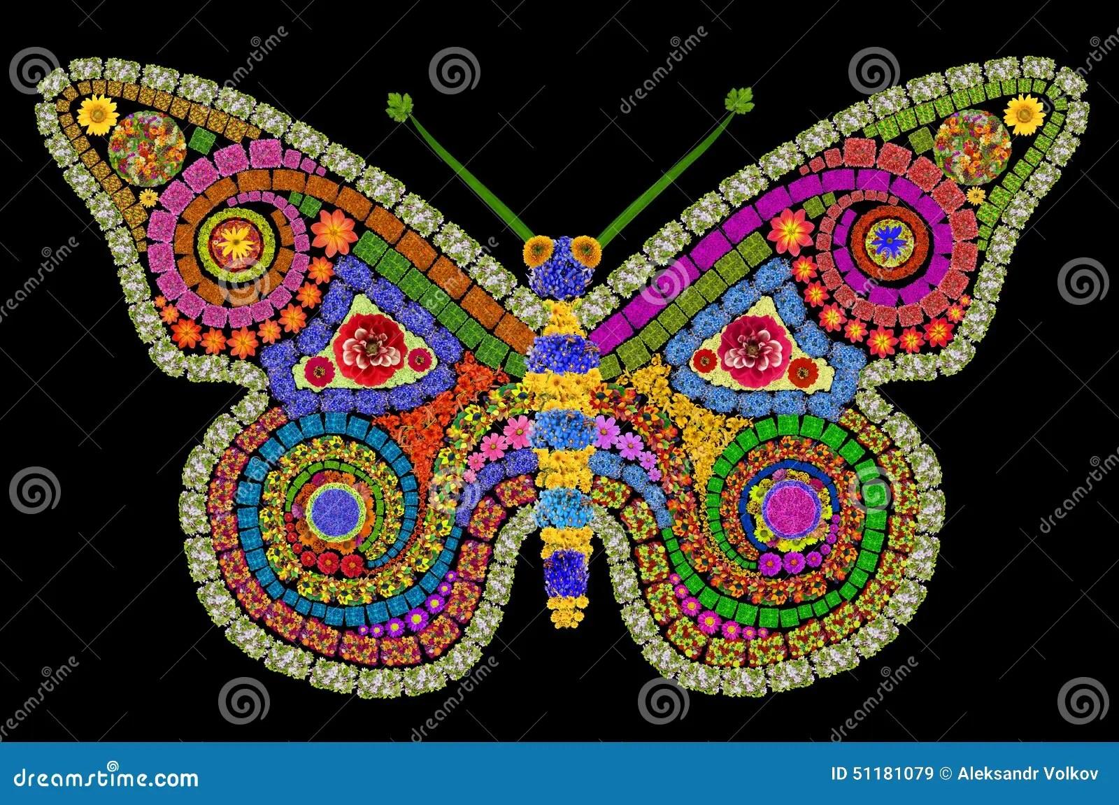 Farfalla Di Notte Fotografia Stock  Immagine 51181079