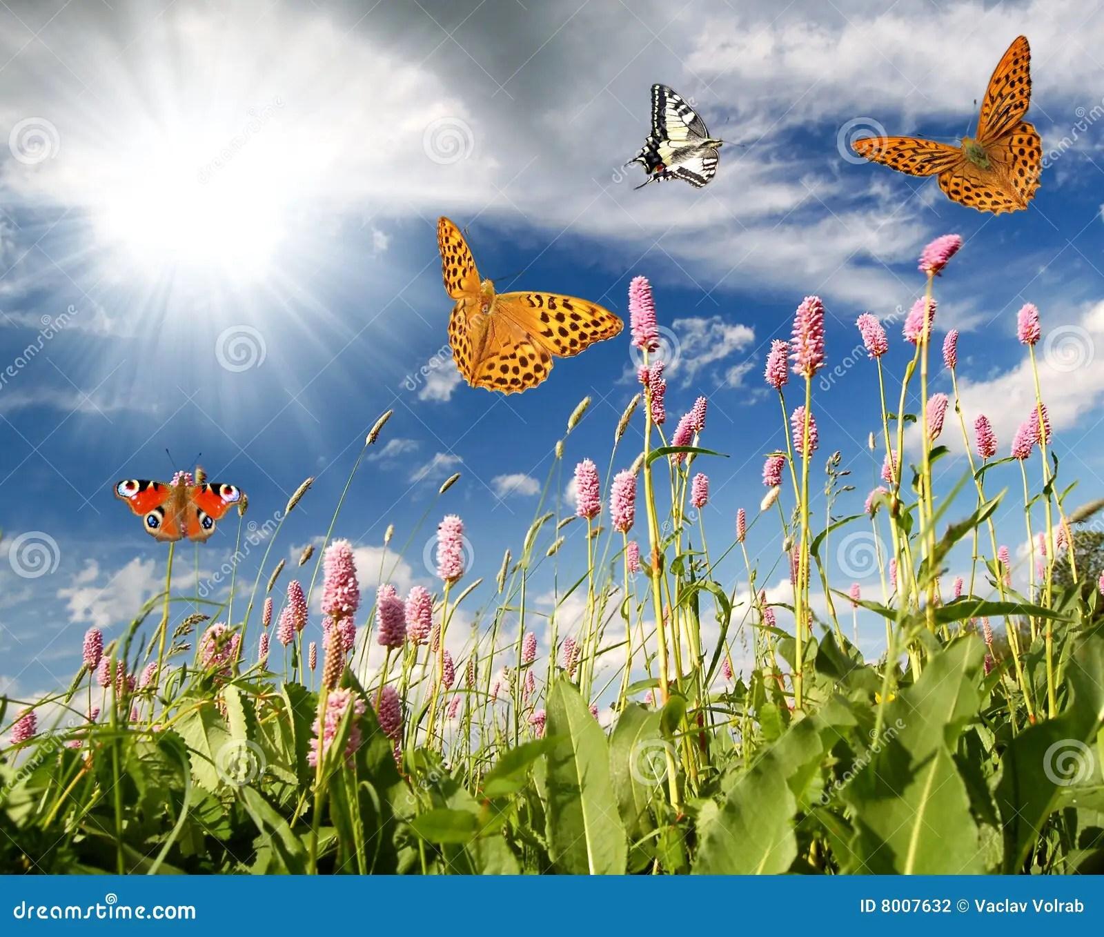 Farfalle Di Volo Nel Prato Del Fiore Fotografia Stock