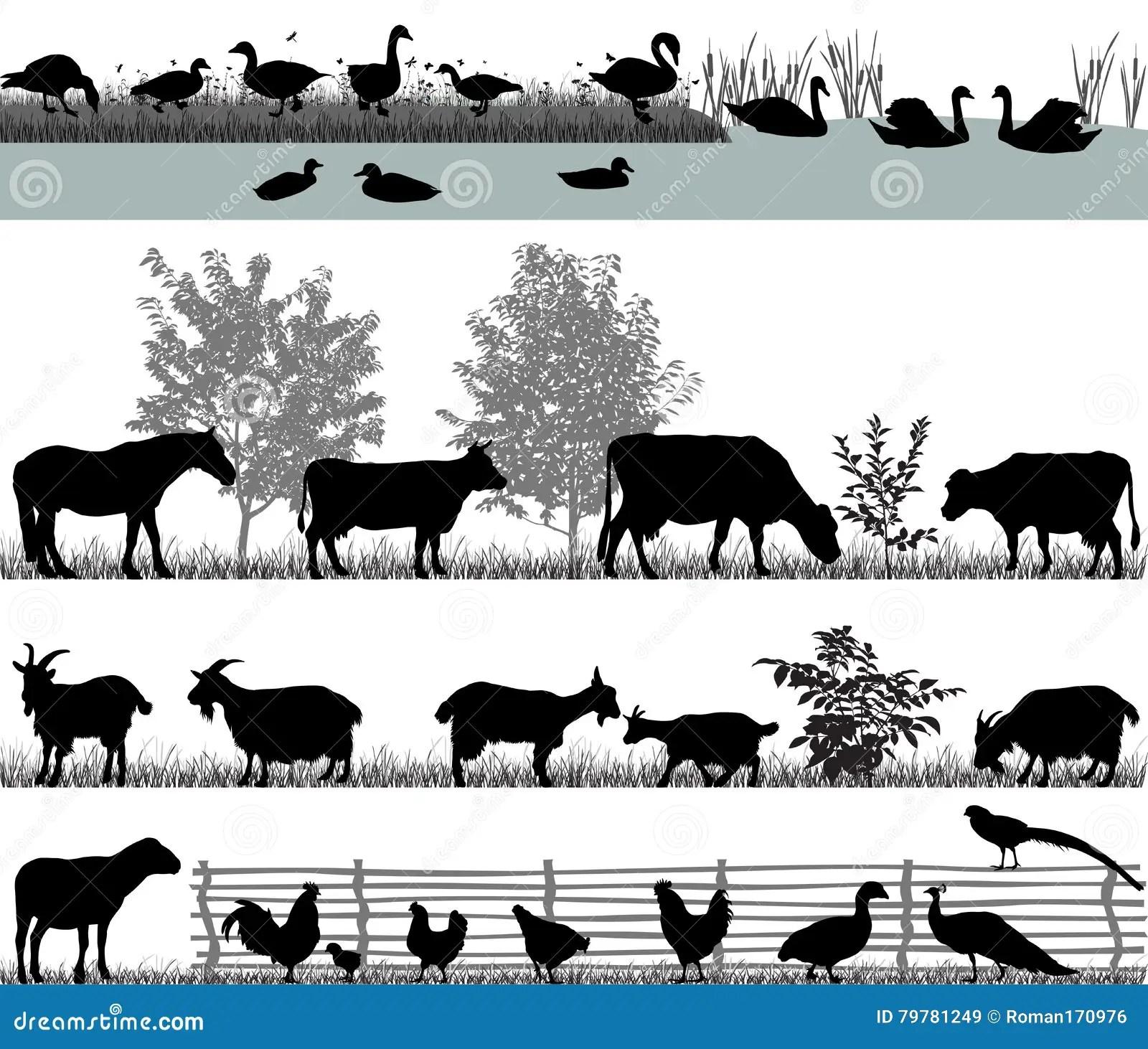 Pheasant Cartoons Illustrations Amp Vector Stock Images
