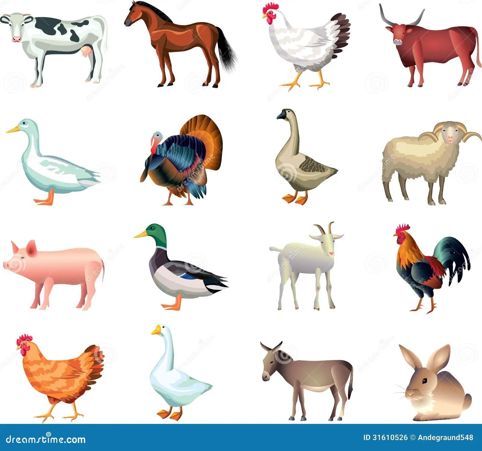 Farm Animals Photo Realistic Set Stock Vector