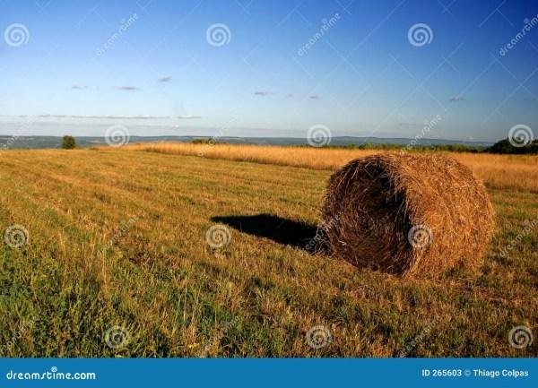 Farm Field Landscape