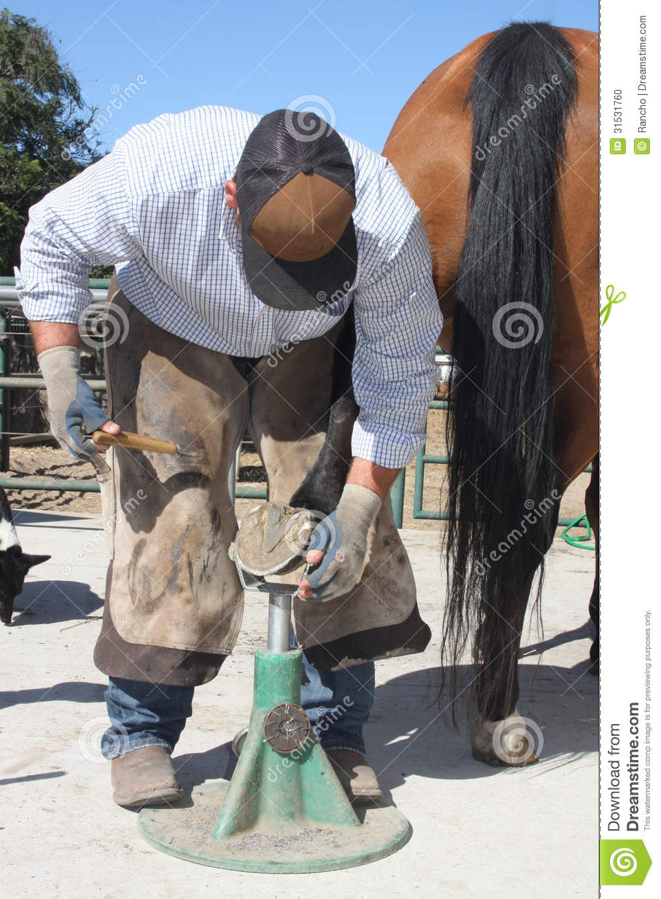 Farrier Days Stock Photo  Image 31531760