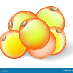 White Fat Cell Diagram Plasma Membrane Easy Cells Illustration 40092946 Megapixl