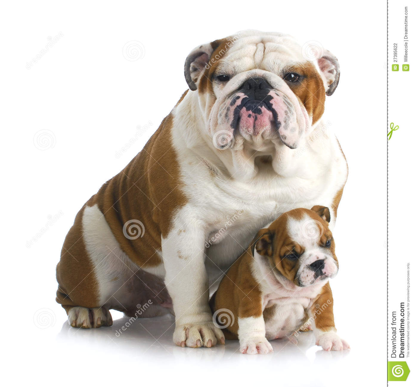 Father And Son Dogs Stock Photography Image 27395622