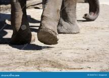 Elephant Feet Walking