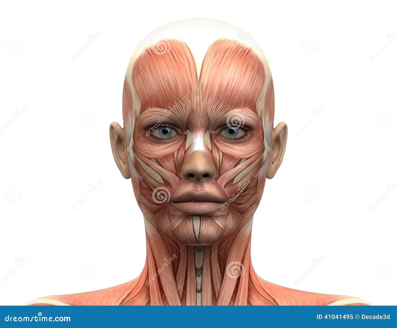 Female Head Muscles Anatomy