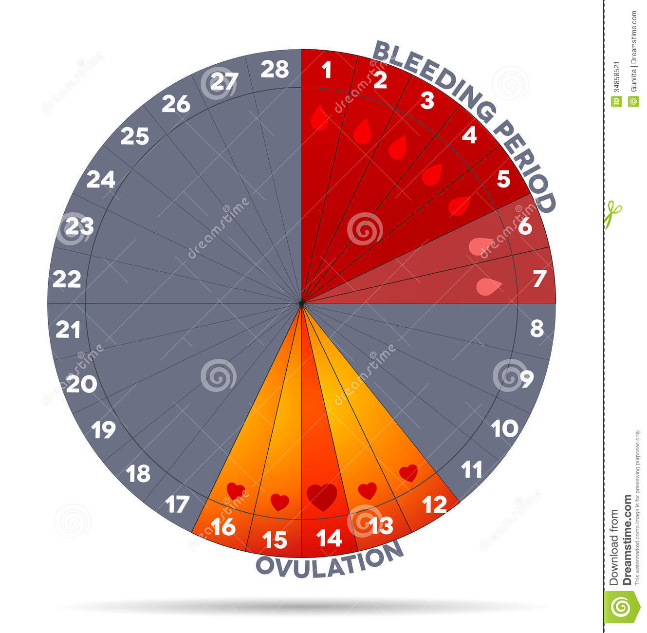 menstrual cycle diagram with ovulation four way light switch female graphic stock image 34858521
