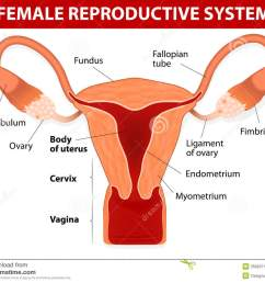 ovary reproductive system diagram labeled [ 1300 x 1066 Pixel ]