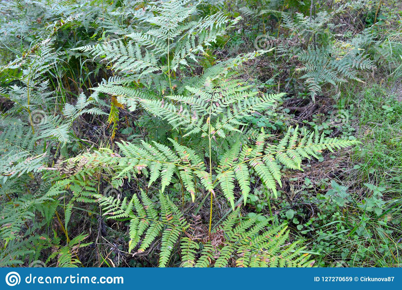 Fern At The End Of Summer Soft Shades Of Green Floral Background Wallpaper