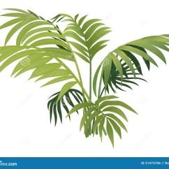 Plant Diagram Clip Art Club Car Precedent Brake Light Wiring Fern Stock Vector Illustration Of Green
